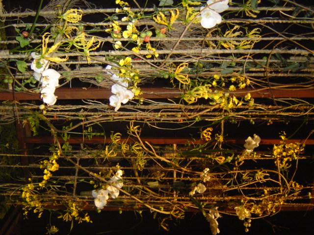 2010-gand-les-floralies-095