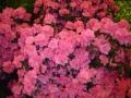 2010-gand-les-floralies-042