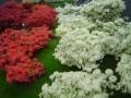 2010-gand-les-floralies-043