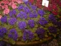 2010-gand-les-floralies-046