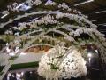 2010-gand-les-floralies-051