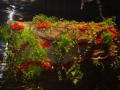2010-gand-les-floralies-097