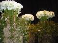 2010-gand-les-floralies-099