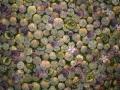 2010-gand-les-floralies-100