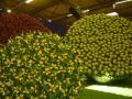 2010-gand-les-floralies-103
