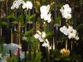 2010-gand-les-floralies-107
