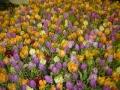 2010-gand-les-floralies-108