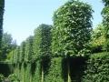 jardins_belgique_10