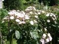 jardins_belgique_5