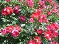 jardins_belgique_8
