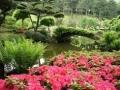 jardin 8